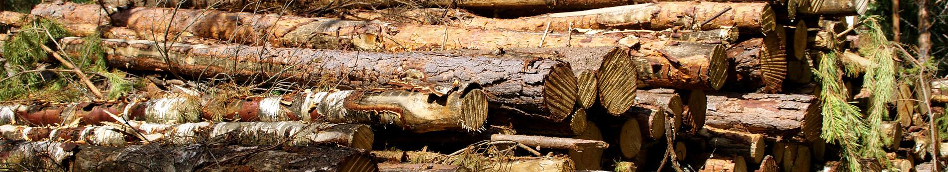 Tree Buyers | Tree Purchasing | Angola Tree Harvesting