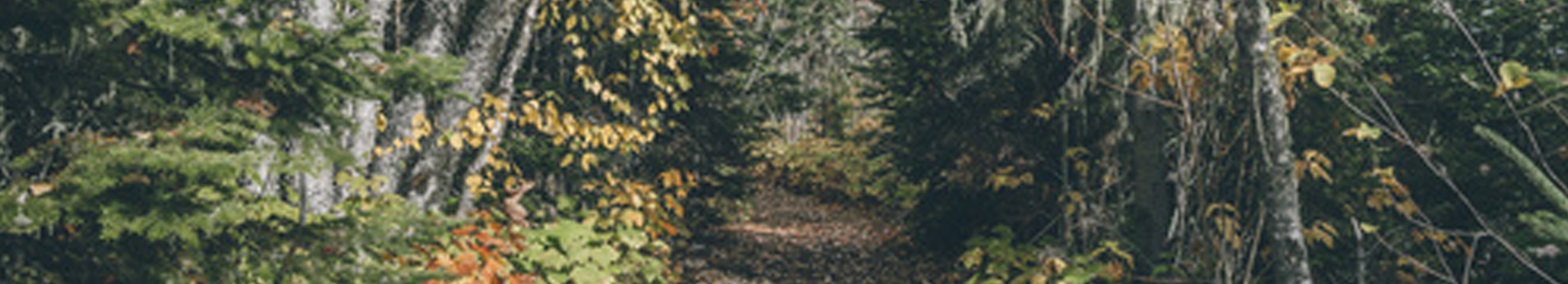 Michigan Tree Harvesting Services | Forest Management